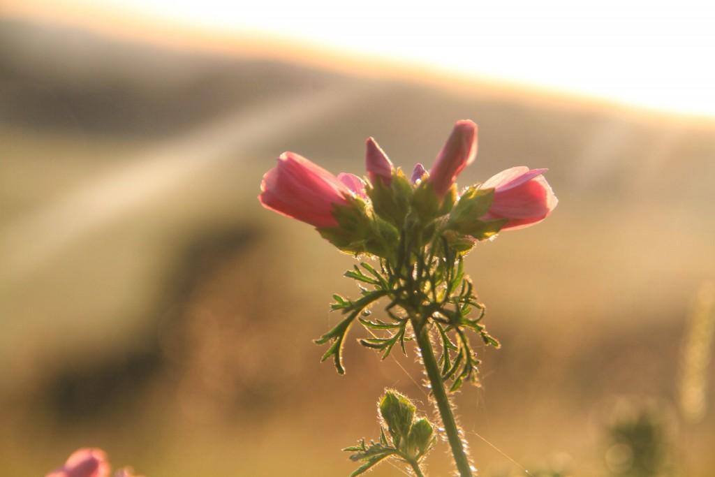 themanoutdoors wildflowers